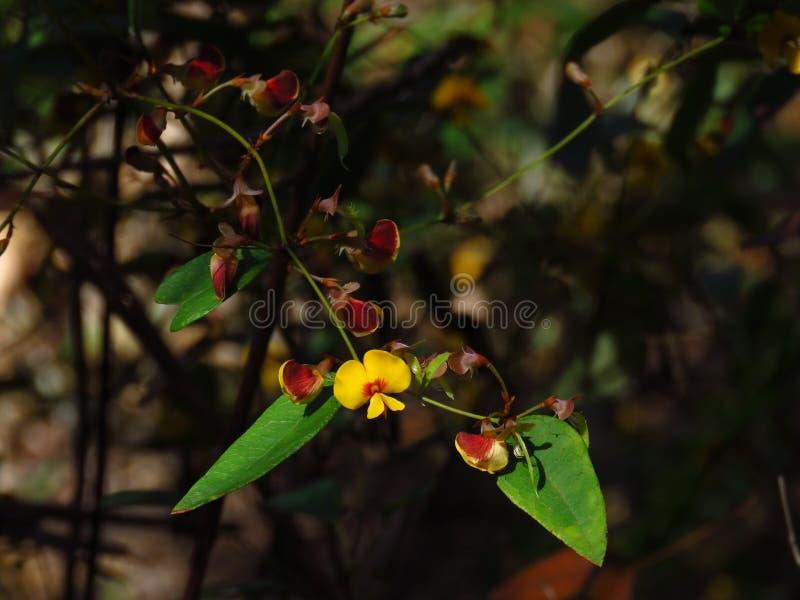 Światło słoneczne na żółtym kwiacie fotografia royalty free