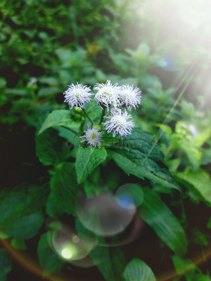 światło słoneczne na pogodnym kwiacie jak wielka kombinacja natura fotografia royalty free