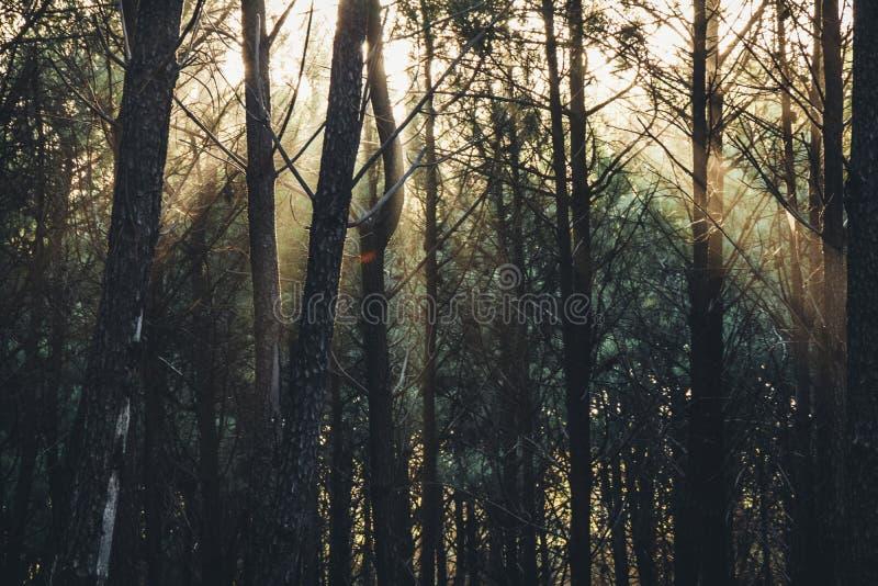 ?wiat?o s?oneczne promienie przez drzew w argenty?skim lesie zdjęcia royalty free