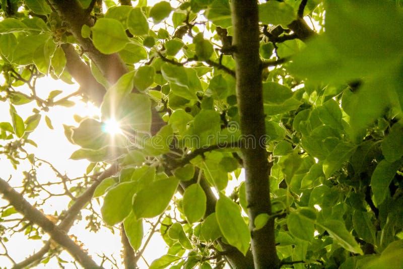 Światło słoneczne przez drzew i liści obrazy stock