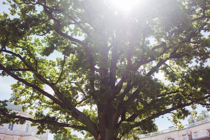 Światło słoneczne przez gałąź ampuły zieleni drzewo zdjęcia stock