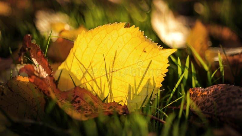 Światło słoneczne przez jesień spadku liścia obraz royalty free
