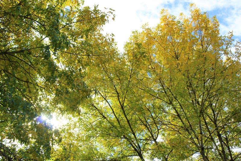 Światło słoneczne przez spadki barwiących drzewo liści zdjęcie stock