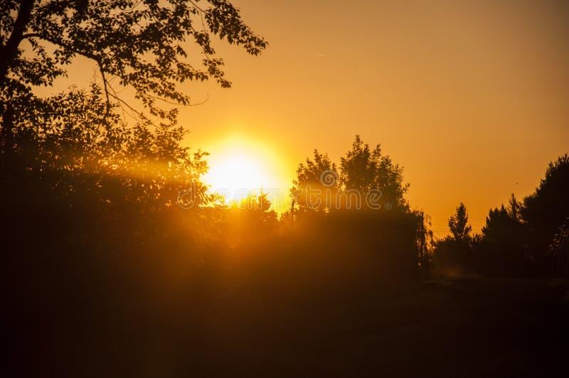 Światło słoneczne spadał na drzewa zdjęcia royalty free