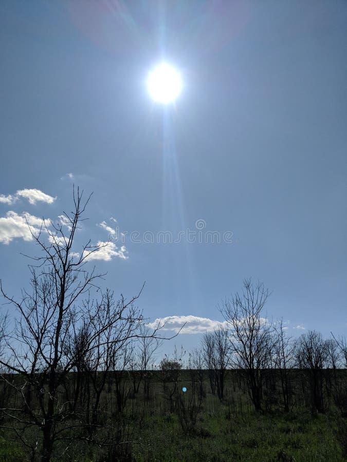 Światło słoneczne w wiośnie fotografia stock