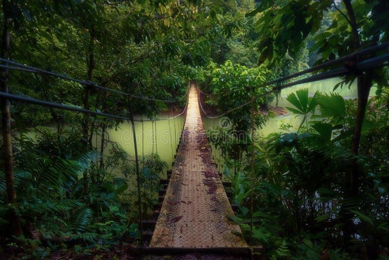 Światły wiszący most w dżunglę zdjęcia royalty free