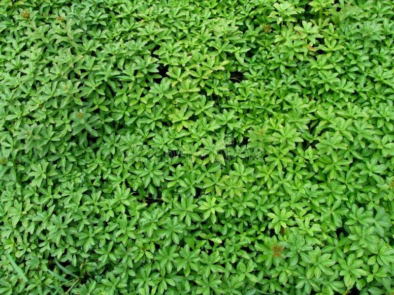 Świat był zielony obrazy royalty free