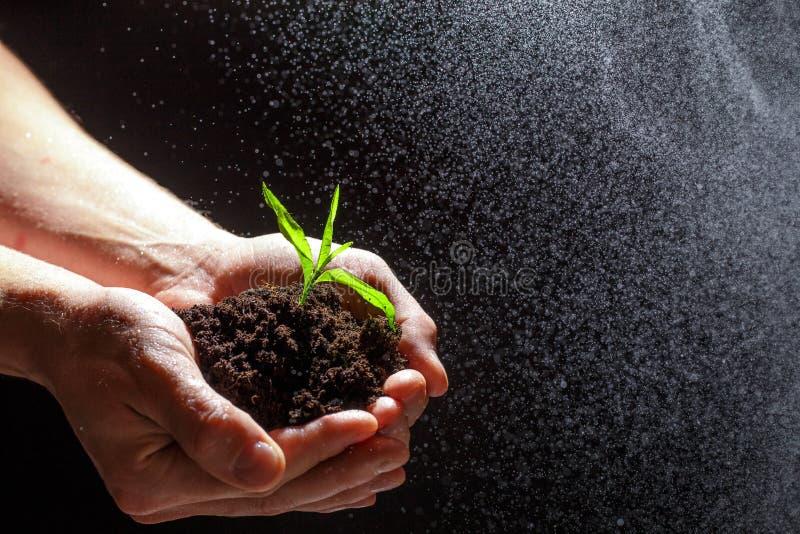 Światowego środowiska dnia pojęcie: Obsługuje rękę trzyma małego drzewa Dwa ręki trzyma jasnozielonego drzewa mienie rozsady odiz zdjęcie royalty free