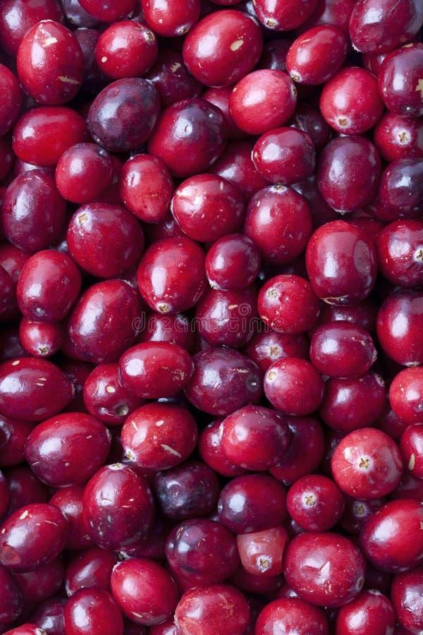 świeża cranberries czerwień obrazy royalty free