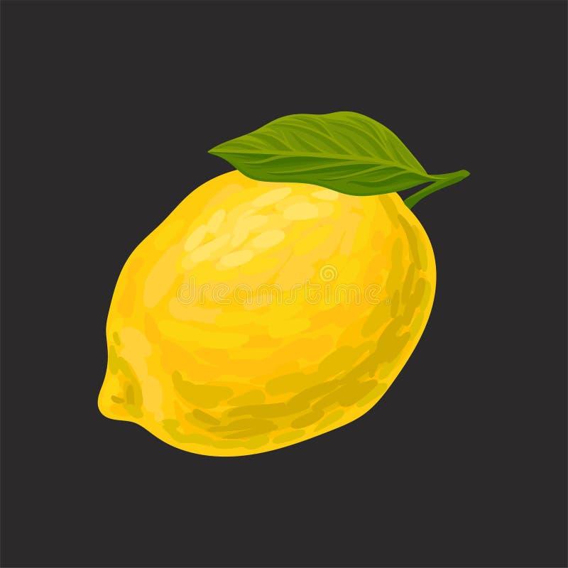 Świeża cytryna, cała cytrus owoc wektorowa ilustracja na czarnym tle ilustracja wektor
