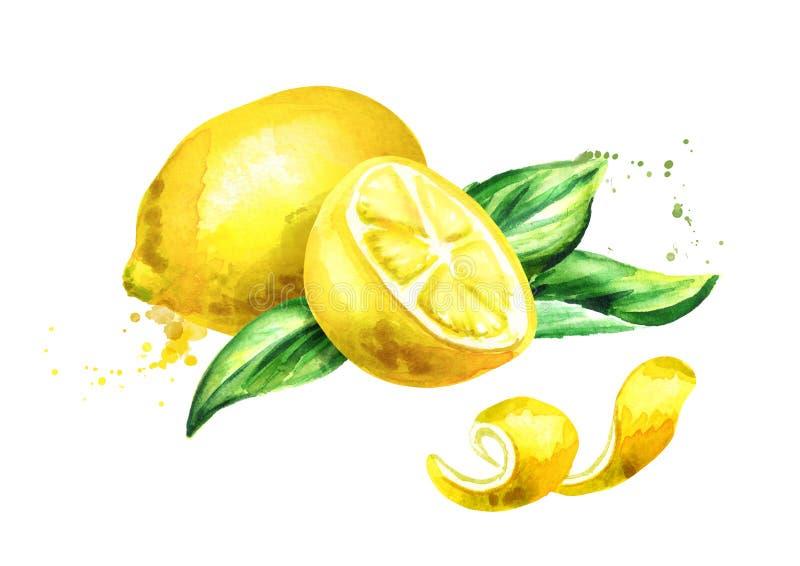 Świeża cytryny owoc i liścia skład Akwareli ręka rysująca ilustracja royalty ilustracja