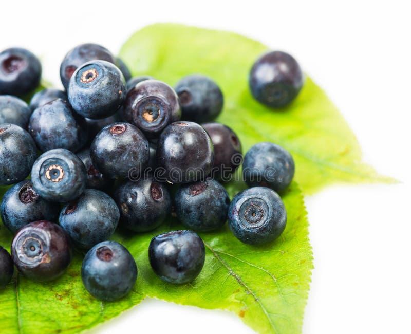 Świeża czarna jagoda na zielonych liściach zdjęcie royalty free