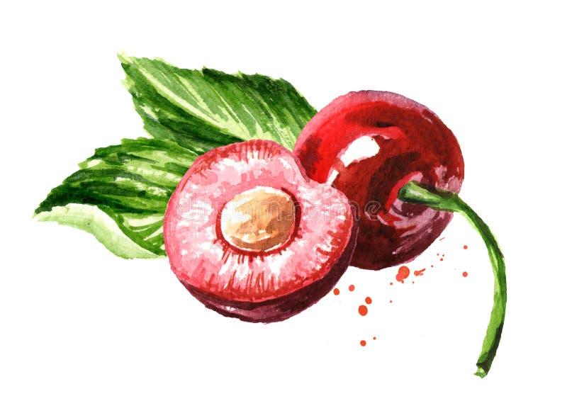 Świeża dojrzała czerwona ręka rysująca wiśni akwareli ilustracja odizolowywająca na białym tle ilustracji
