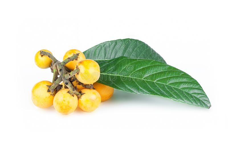 Świeża dojrzała loquat japońskiego niesplika owoc z gałąź i liściem na białym tle obrazy royalty free