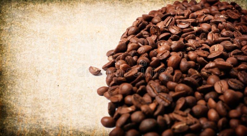 świeża fasoli kawa obraz royalty free