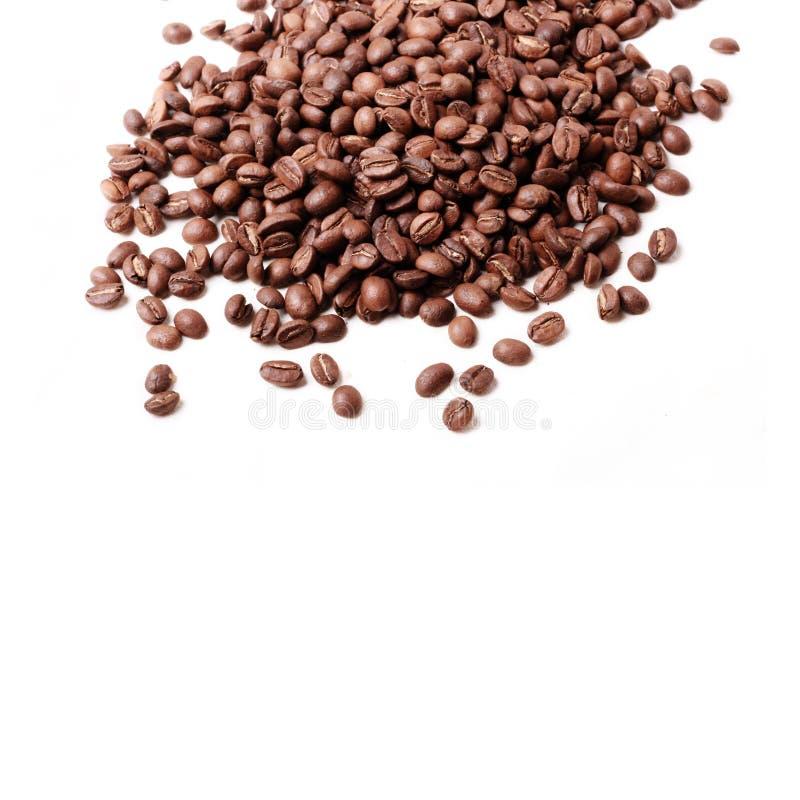 świeża fasoli kawa zdjęcie stock