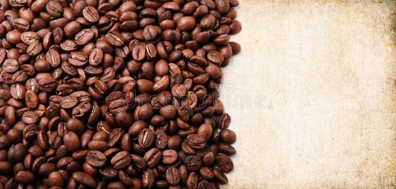 świeża fasoli kawa obraz stock
