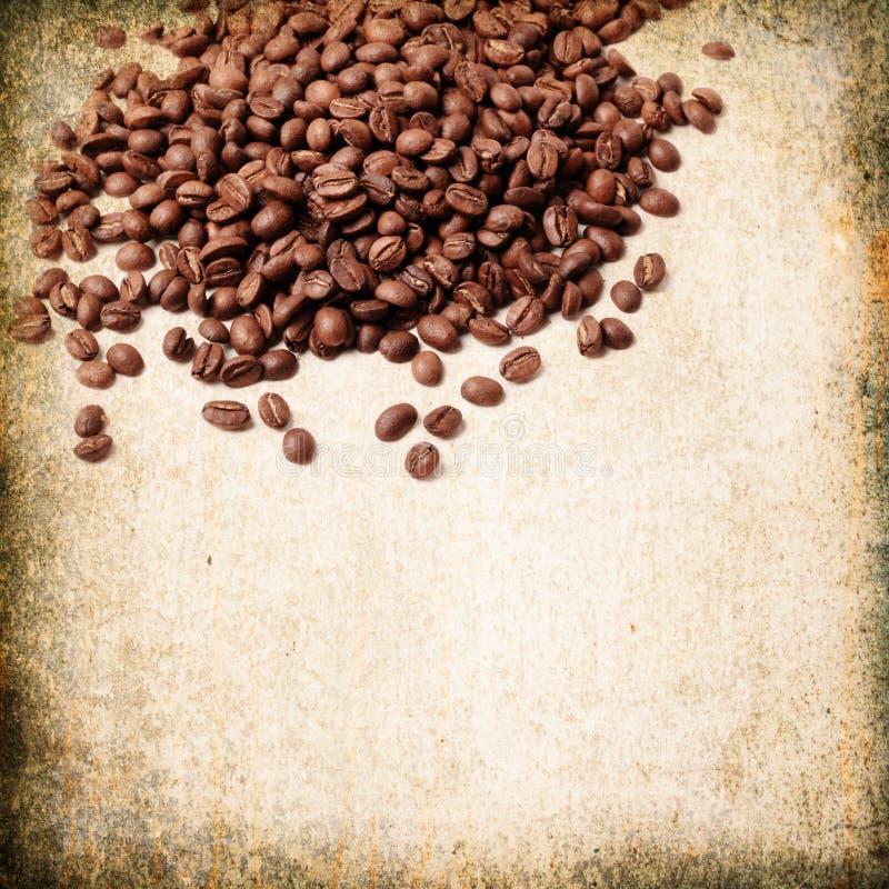 świeża fasoli kawa obrazy stock