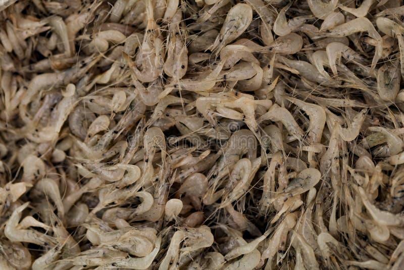 Świeża garnela w rynku zdjęcie royalty free