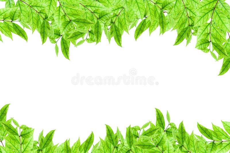 Świeża młoda zielonej rośliny i liścia rama na białym tle obrazy royalty free