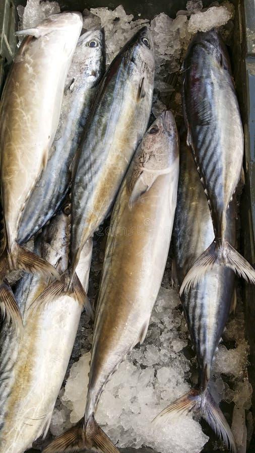 Świeża makrela na rynku kramu fotografia royalty free