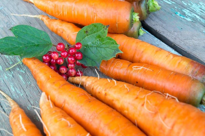 Świeża marchewka w jesieni gospodarstwie rolnym obrazy royalty free