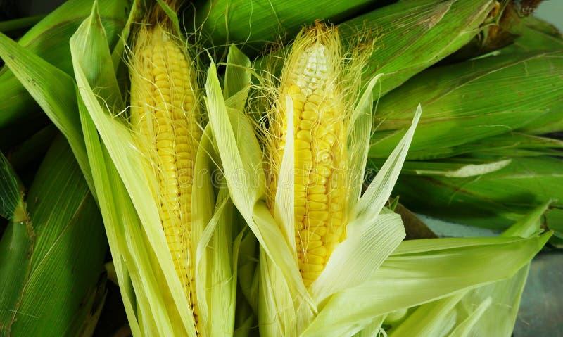 Świeża organicznie żółta słodka kukurudza fotografia royalty free