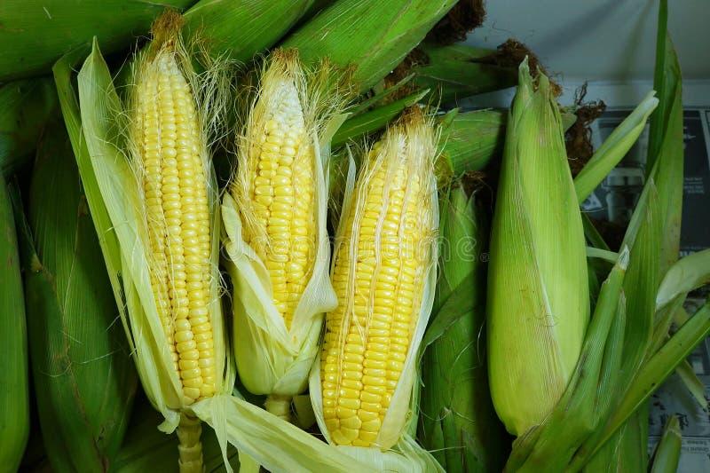 Świeża organicznie żółta słodka kukurudza obrazy royalty free