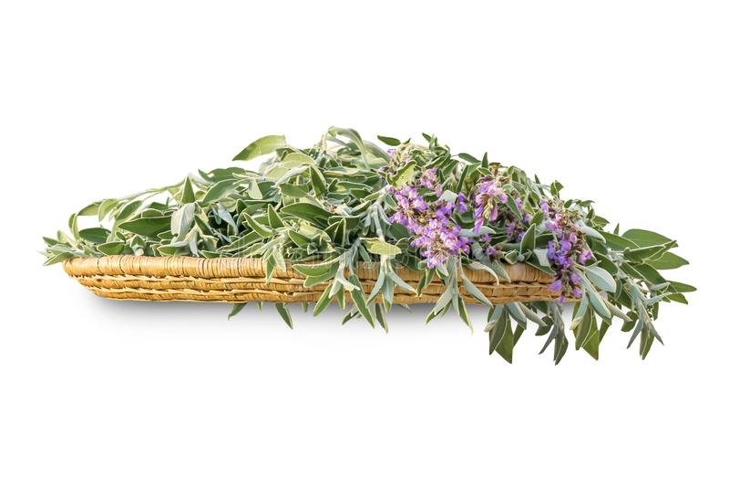 Świeża rżnięta mędrzec rozgałęzia się z kwiatami i liśćmi na łozinowej drewnianej tacy Wiązka kuchenne zielarskie szałwie odizolo fotografia stock