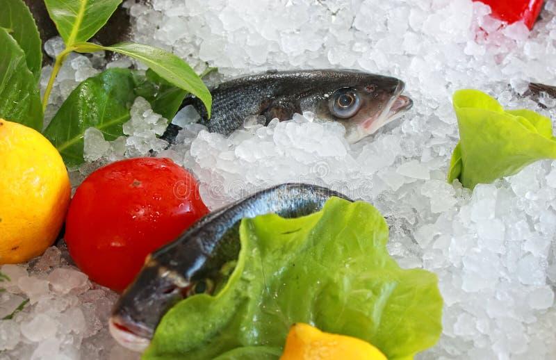 Świeża ryba obrazy stock