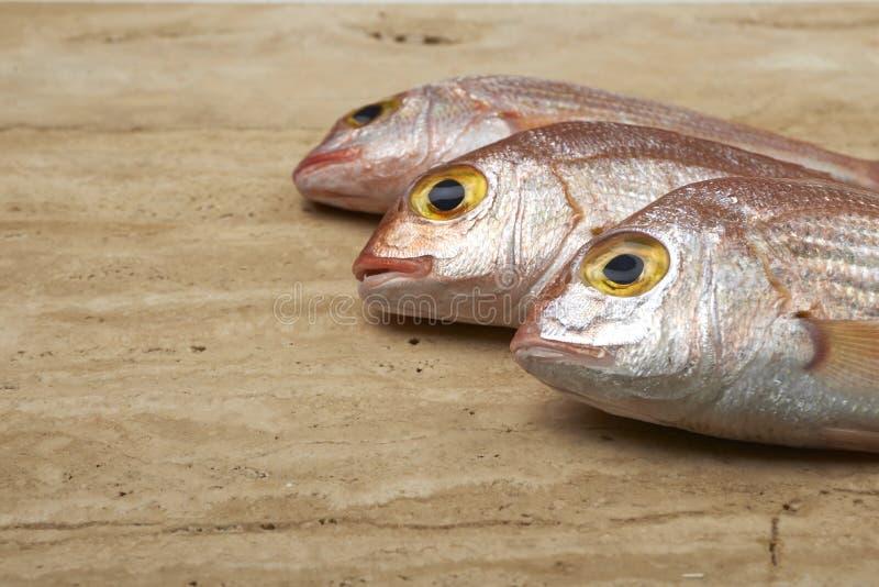 Świeża ryba, czerwony snapper fotografia royalty free
