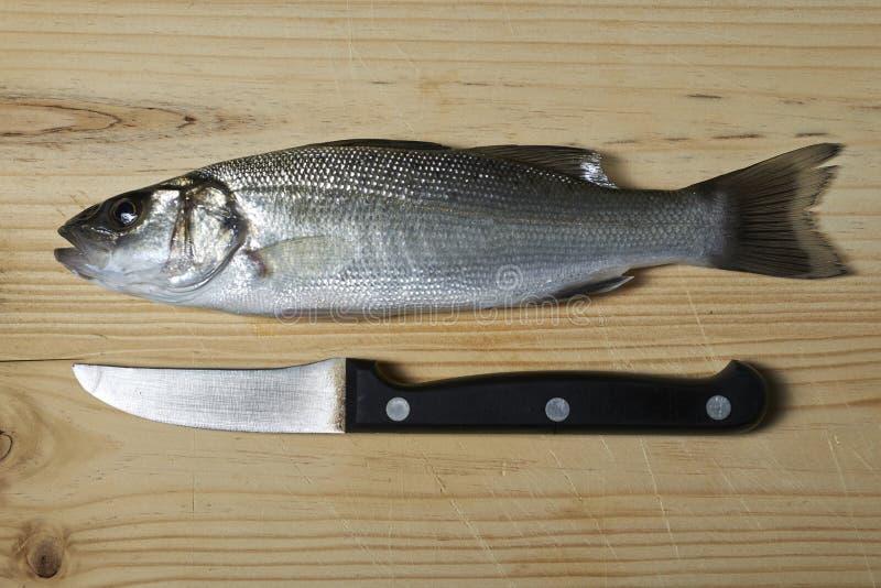 Świeża ryba, denny bas fotografia royalty free