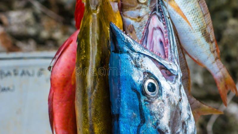 Świeża ryba kupować na Painemo wyspie, Raja Ampat, Zachodni Papua, Indonezja obrazy royalty free