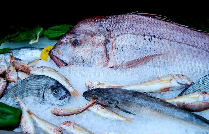 Świeża ryba na Lodowym pokazie obrazy stock