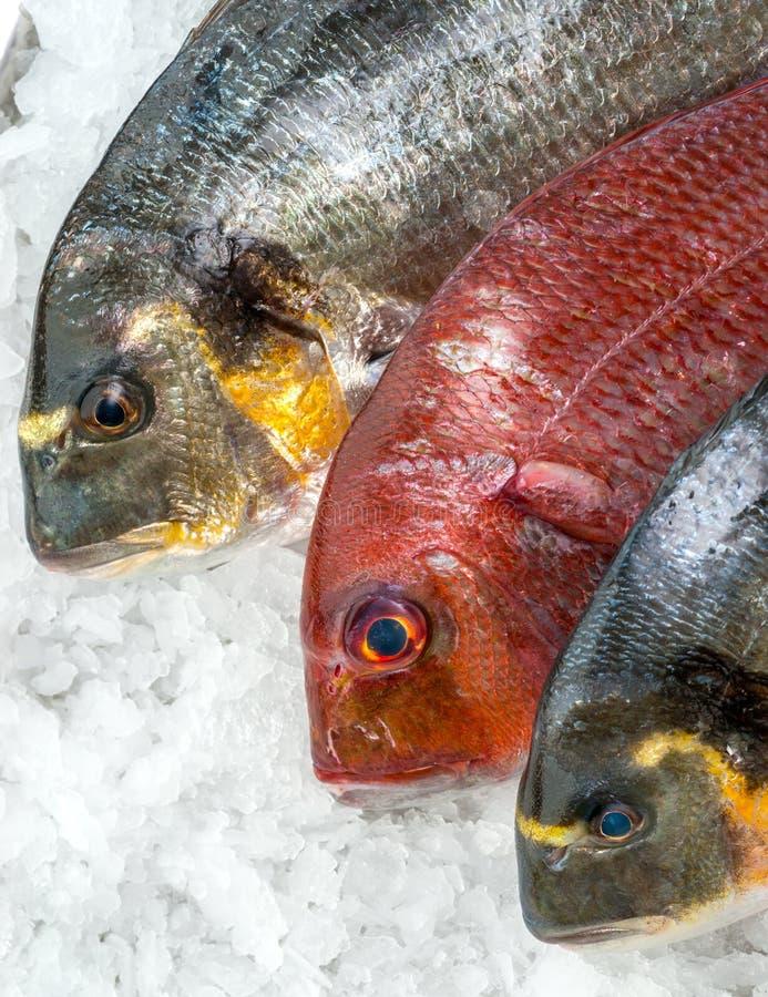 Świeża ryba na lodzie przy rybim rynkiem obrazy royalty free