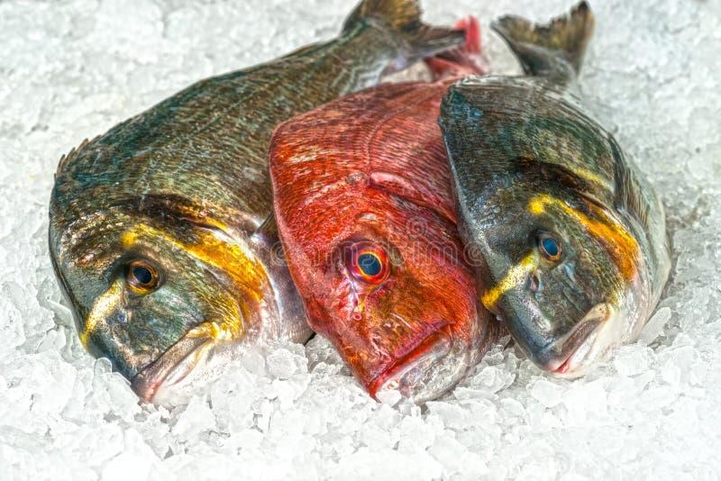 Świeża ryba na lodzie przy rybim rynkiem fotografia royalty free