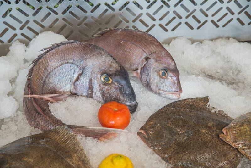 Świeża ryba na lodzie w restauraci w Rabat obraz royalty free