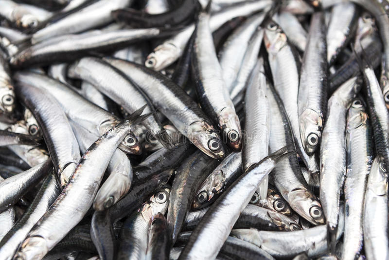 Świeża ryba obrazy royalty free