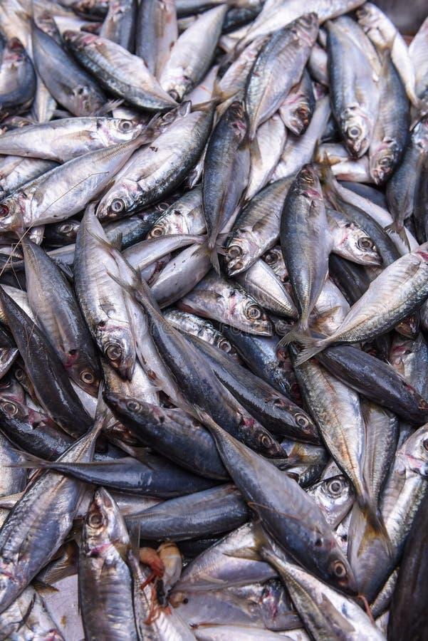 Świeża ryba przy rynkiem fotografia stock