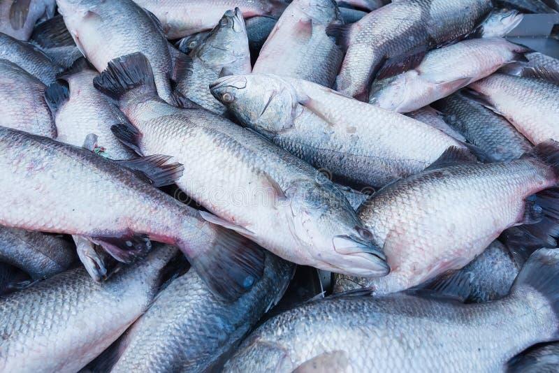Świeża ryba w rynku który jest czerwonym snapperem i bielu pokazem Qu obrazy royalty free