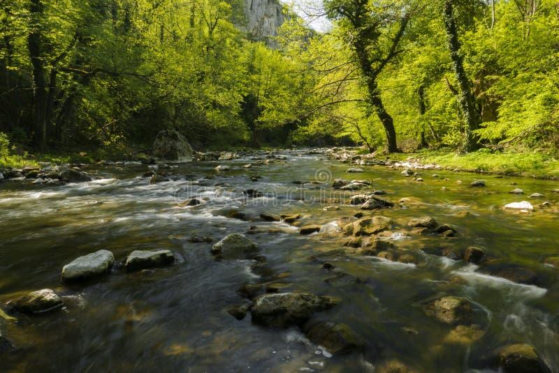 Świeża rzeka zdjęcie stock