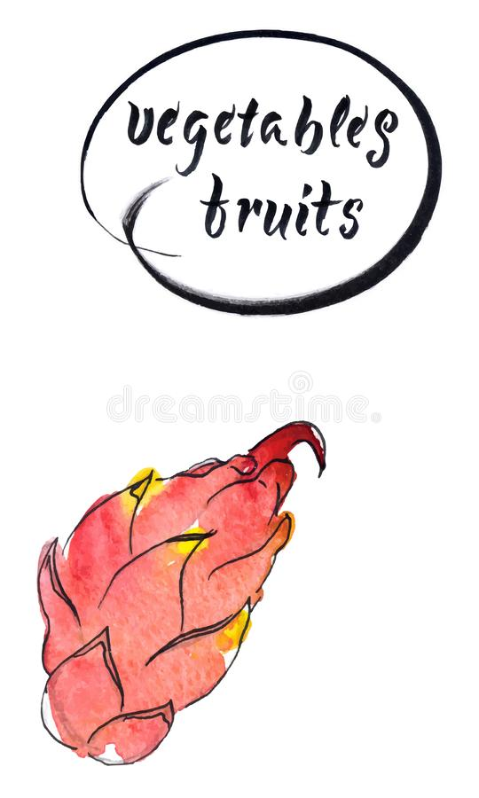 Świeża surowa smok owoc, akwareli ręka rysująca ilustracja ilustracji