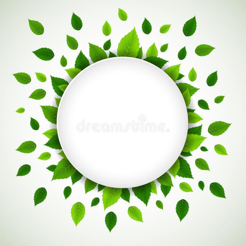 świeża tło zieleń opuszczać naturę ilustracja wektor