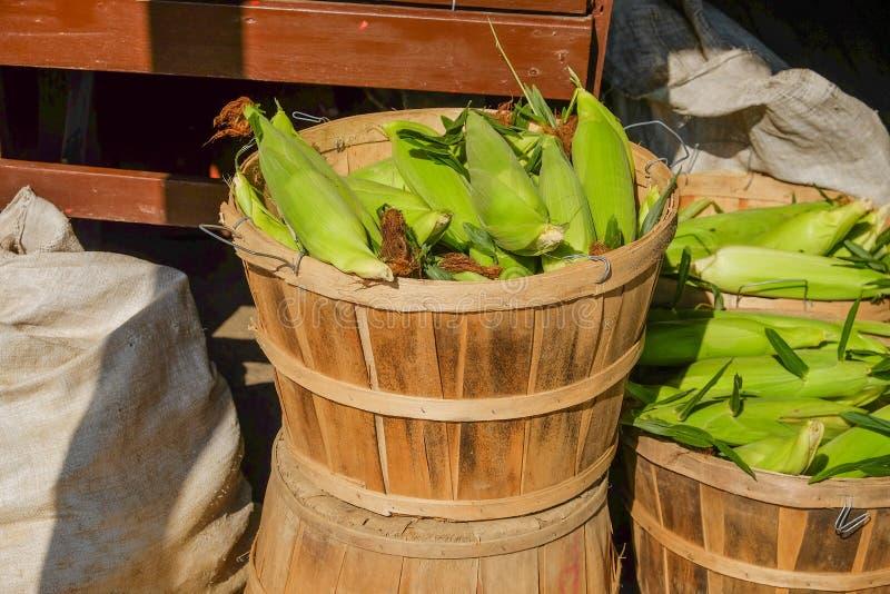 Świeża ukradziona rolna kukurudza w drewnianym koszu przy lokalnym gospodarstwo rolne stojakiem fotografia stock