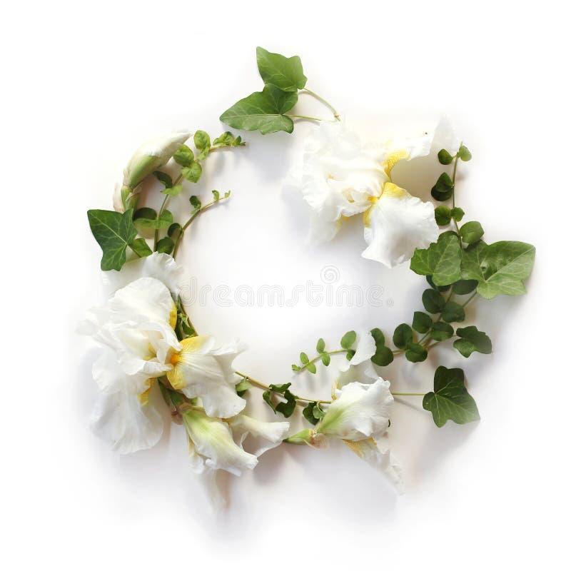 Świeża wakacyjna kwiecista rama robić Irysowi biali kwiaty, pączki obrazy stock