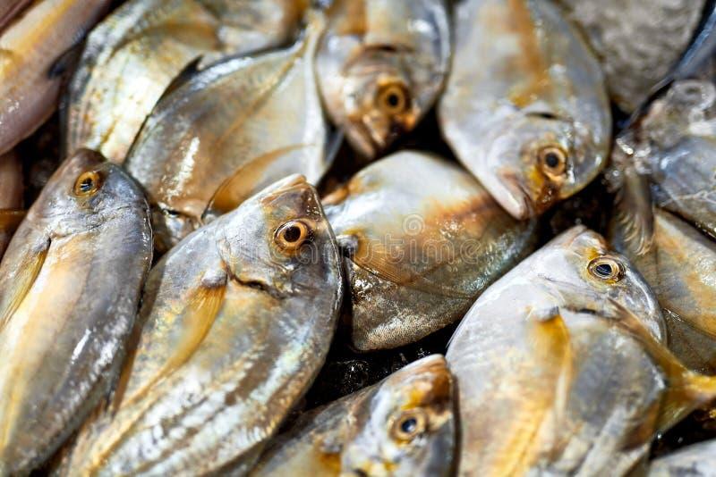 Świeża Żywność, Surowa ryba Malabar Trevally Zdrowy odżywianie, dieta, obraz stock