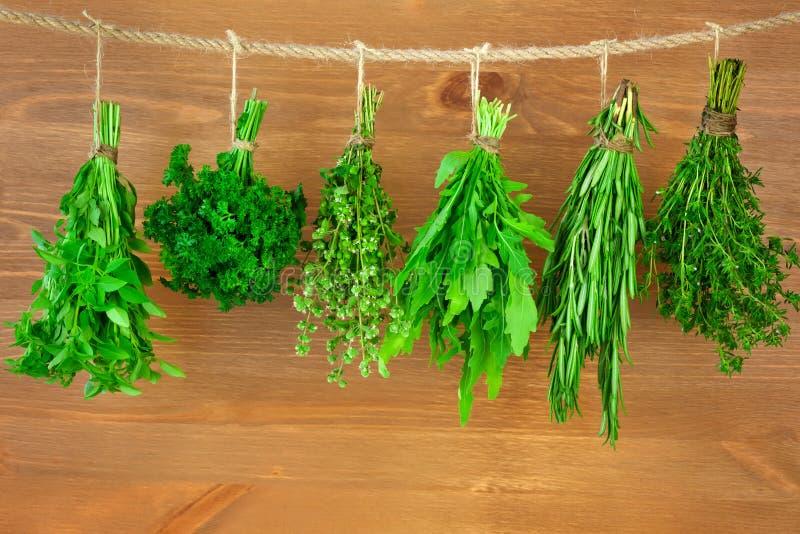 Świeża ziele kolekcja, rocznika styl/ zdjęcie royalty free
