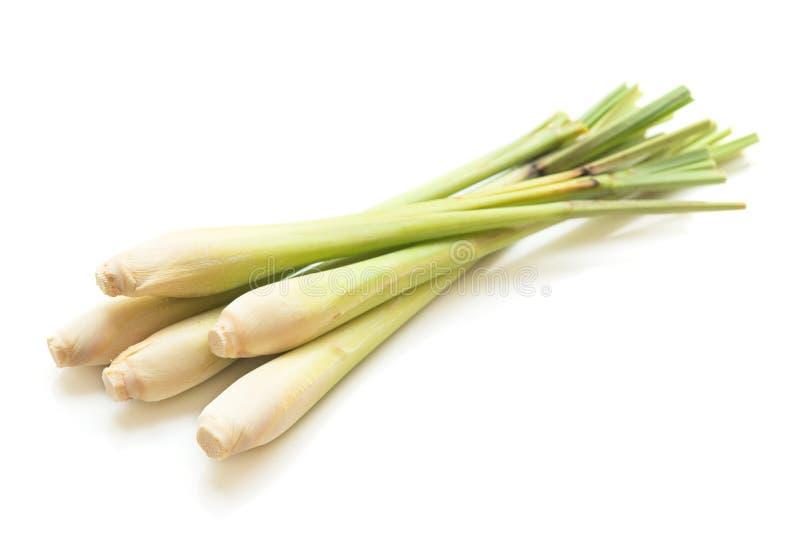Świeża zielona cytryny trawa obrazy stock