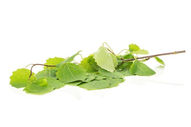 Świeża zielona roślina odizolowywająca na bielu obrazy royalty free