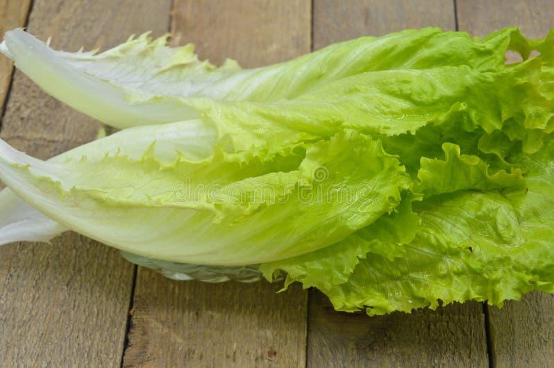 Świeża zielona sałata opuszcza, ideał dla diety fotografia stock